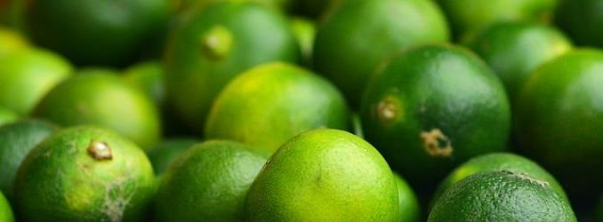 LimeTorrents Fights Blocking Efforts With New Domain and Homepage