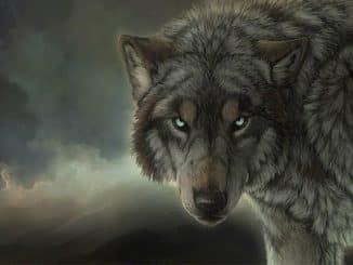 Wolf Pack Kodi Addon - Featured